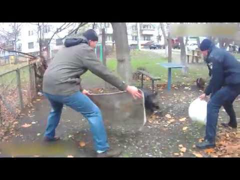 Как украинские патрульные свиню ловили