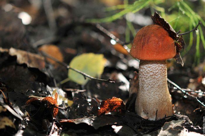 осенние грибы фото - 16
