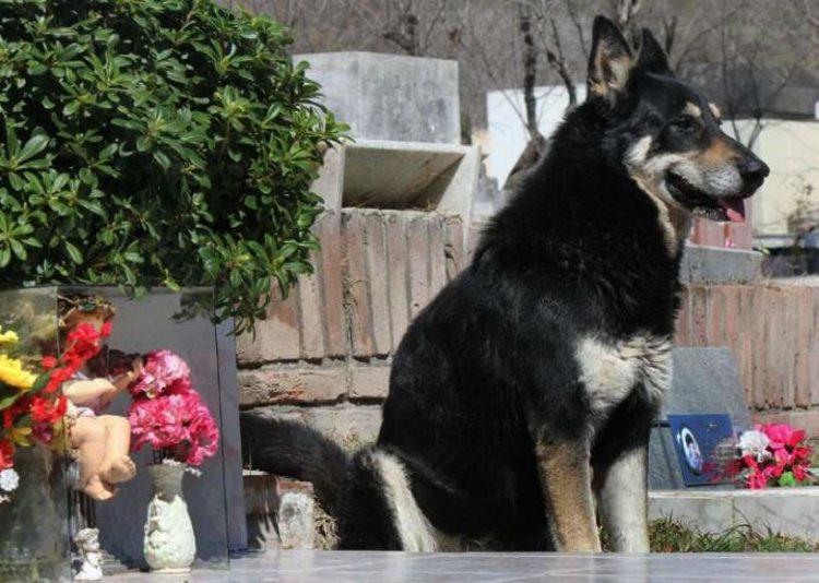 10 лет этот пес живет на могиле хозяина