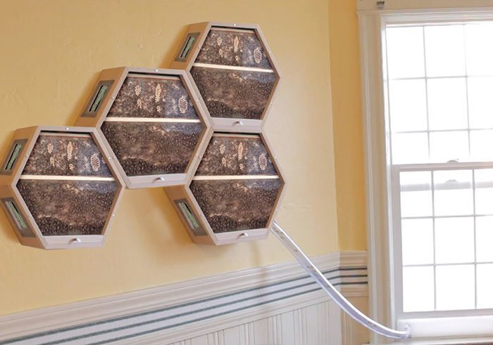 Одна компания придумала, как можно интегрировать пчелиные ульи в ваш домашний интерьер