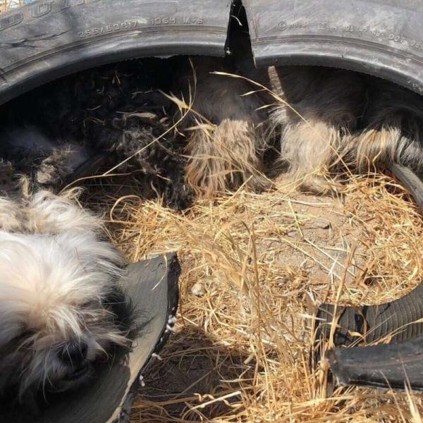 Маленьких собачек выбросили …