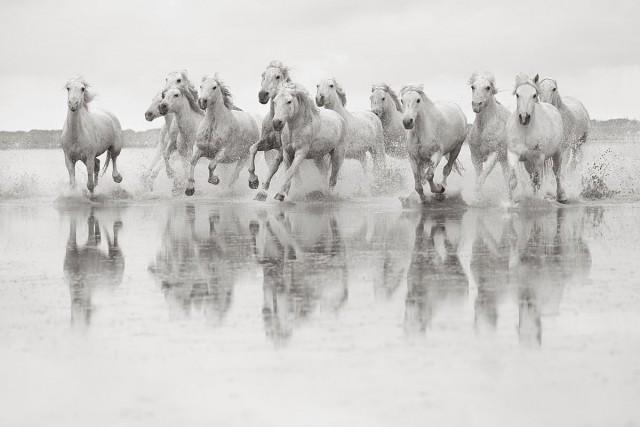 Белые лошади Камаргу