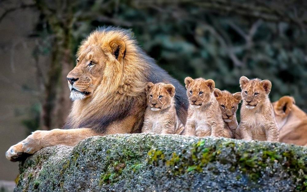 В мире животных - прекрасные фото от Михалыча!
