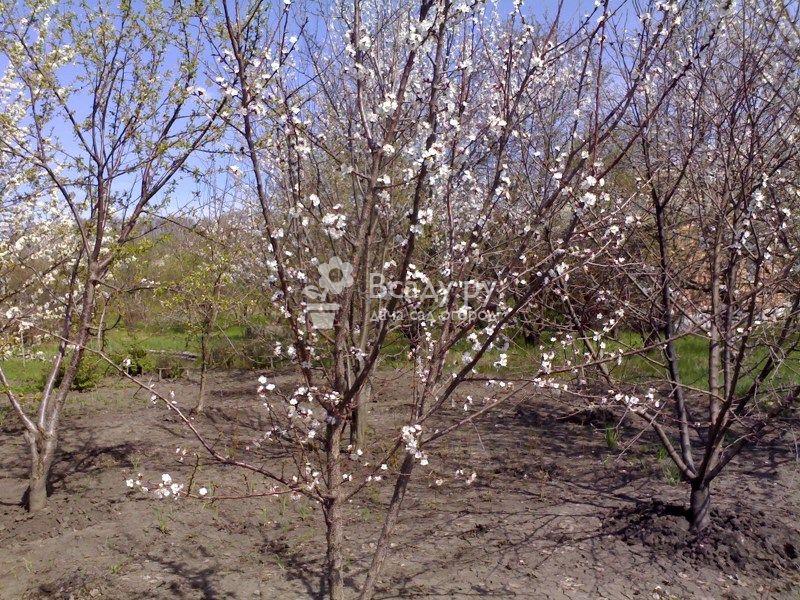 Выращивание вишневого сада на даче