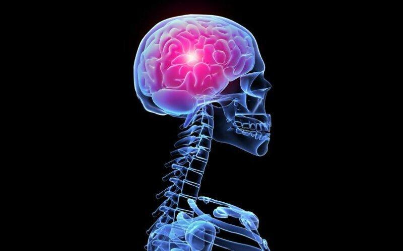 Ученые рассказали о способности мозга восстанавливать факты из улик могзг, наука, ученые