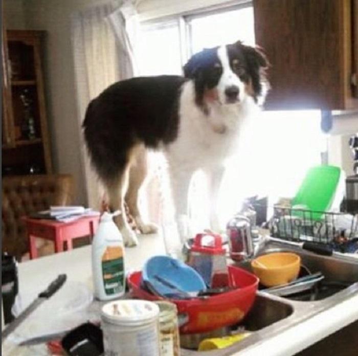 И как же мне в этой куче посуды добраться до крана?