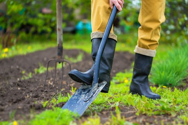 Вилы и лопаты. Как выбрать идеальный инструмент для работы в огороде?
