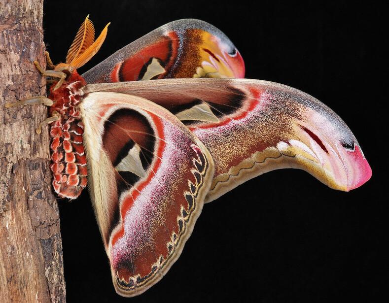 ТОП-8 насекомых, которые моглибы победить вконкурсе красоты, если бы такой существовал