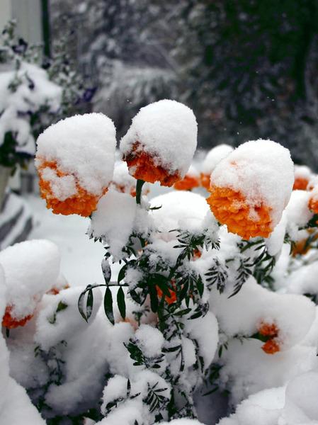 Под снегом.