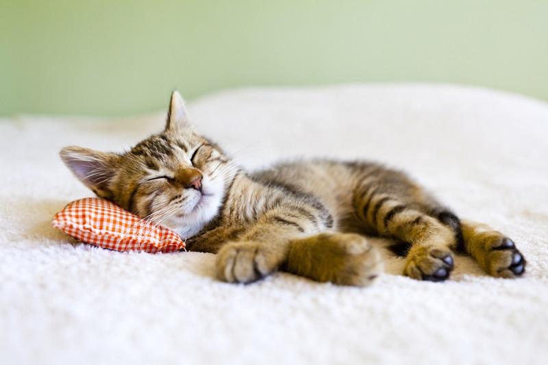 как быстро уснуть если не спится