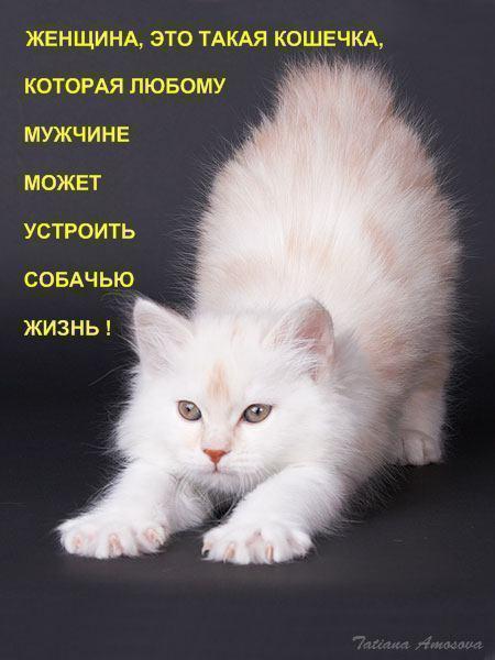 Прикольные поздравленья о кошках 531