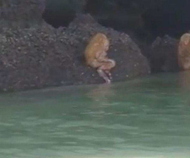 В Таиланде туристы перепугал…