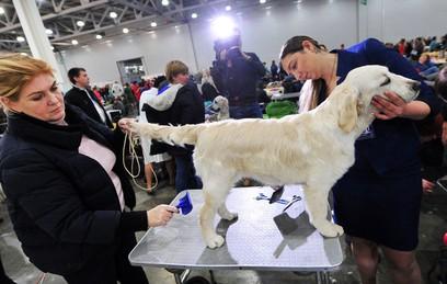 В Москве около 300 пород собак поборются за звание чемпиона