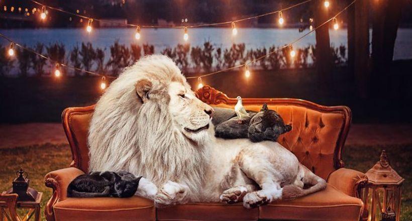 16 великолепных портретов животных от Андреаса Хэггквиста с очень важным посланием