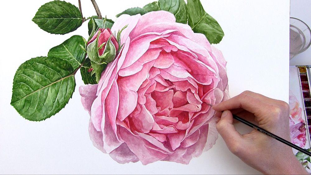 Настоящая волшебница ботанической иллюстрации — Anna Mason