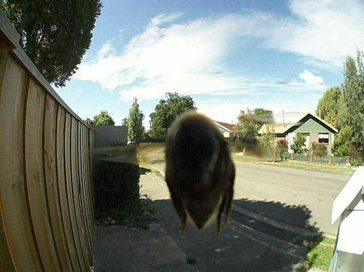 14. Чей-то дверной глазок с датчиком движения запечатлел пчелу Забавные фото, забавные фотки, неожиданные, смешные фото, удивительные фото