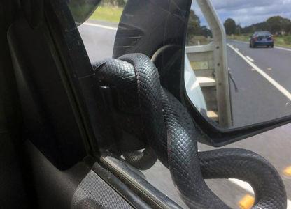 Леденящий душу взгляд: змея атаковала автомобиль