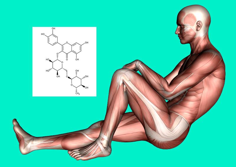 Чем полезен витамин Р для организма