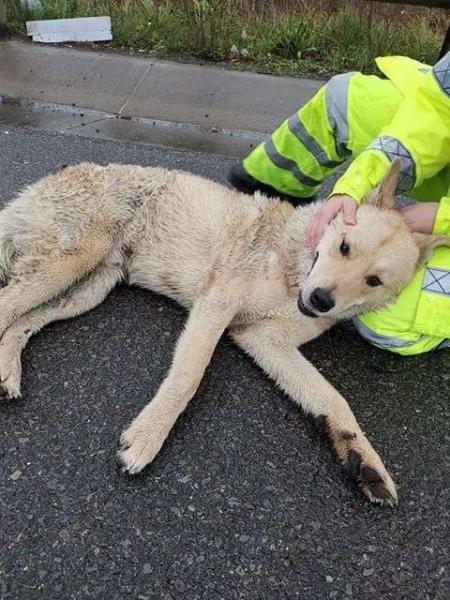 Сбитая автомобилем собака см…