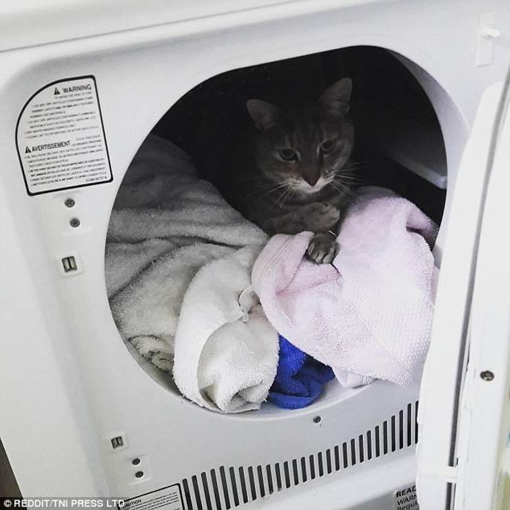 17 примеров: умная кошка мерзнуть не будет!