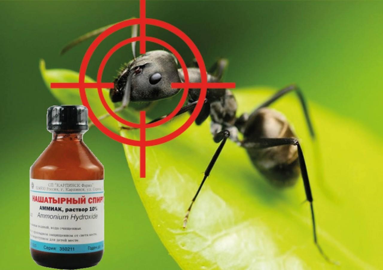 Нашатырный спирт даст хорошего пендаля муравьям и другим мошкам