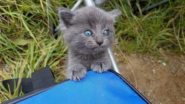 Бездомный котенок отчаянно п…