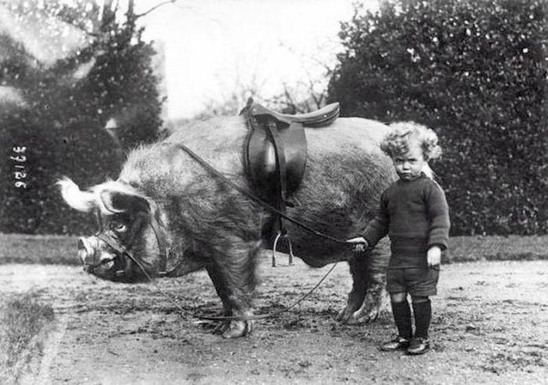 10. Мальчик и его «транспорт». США, начало XX века. история, фото
