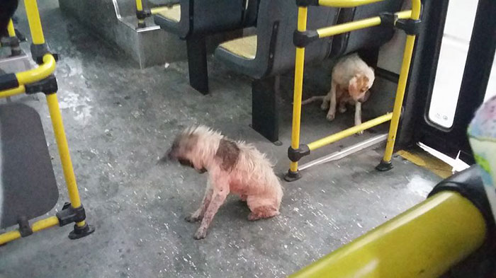 When This Bus Driver Saw Stray Dogs Shivering In The Storm, He Stopped The Bus To Give Them A Ride