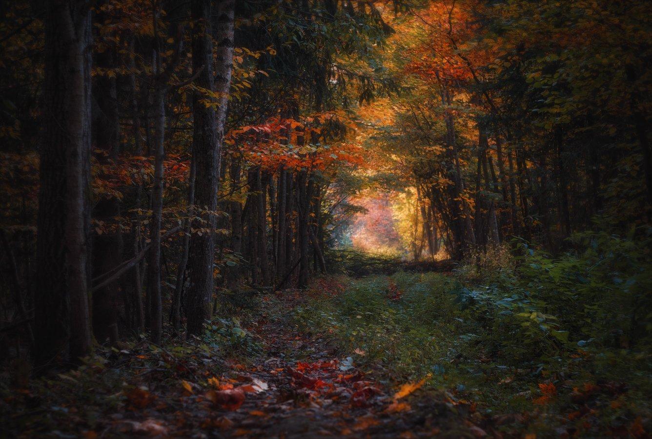 Осень в лесу Сергей Шабуневич