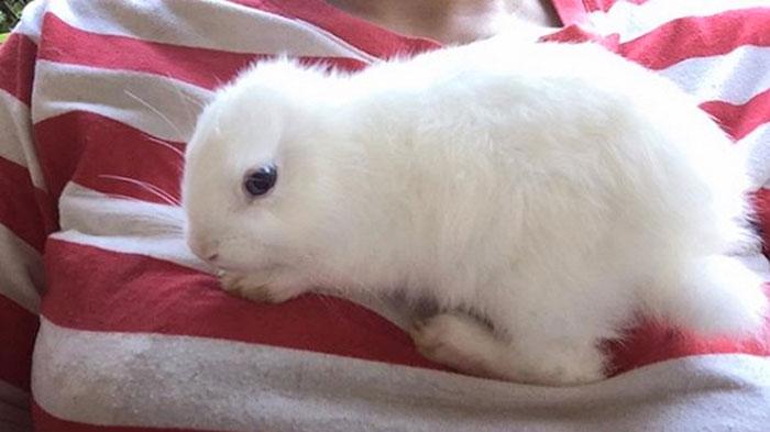 Малыш-кролик появился на све…