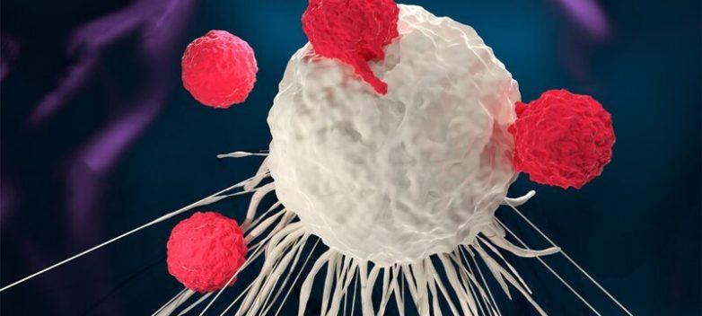 Учёные научили раковые клетки убивать самих себя