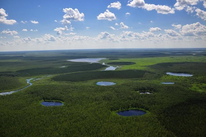 Большое Васюганское болото - природный феномен, не имеющий аналогов в мире! красота, природа, россия, сибирь