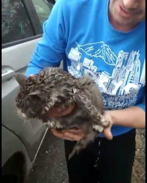 Кошка проехала 150 километров, вцепившись в подвеску колеса и выжила