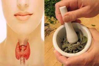 Очищаем щитовидку - рецепты народной медицины