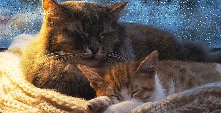 О том, почему нас тянет вздремнуть под перестук дождя
