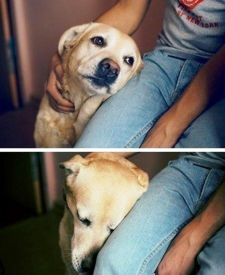 Только собака впитает всю вашу боль, когда это так необходимо..