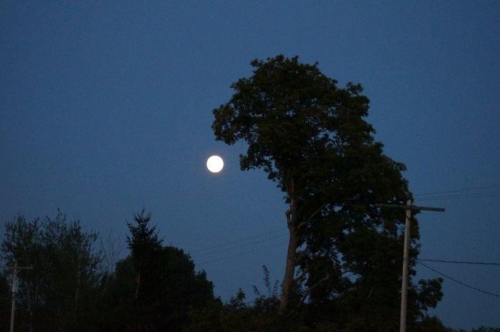 17. Дерево-годзилла собирается сожрать луну дерево, деревья, обман зрения, парейдолия, похоже да не то же, похоже на, похоже на лицо