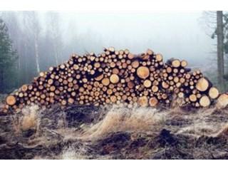Россия предложила Китаю подумать о сибирских лесах