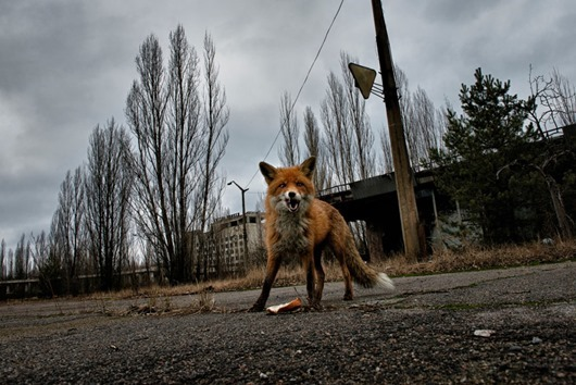 Чернобыльский лес шокировал мир