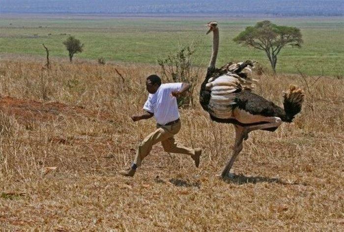 Такое увидишь только в Африк…