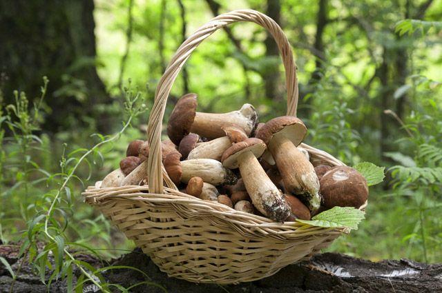 От ожирения до деменции. Какие болезни лечат грибы