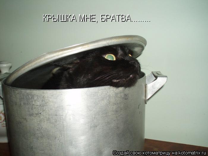 Суп с котом (кошкой)… История в трёх частях