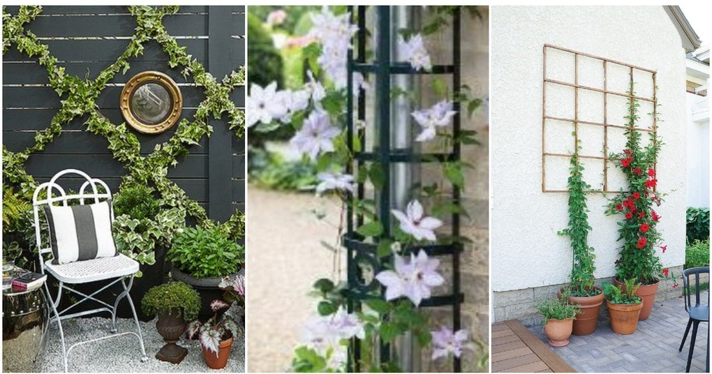 Эффектные опоры и решетки для сада: просто, функционально и красиво