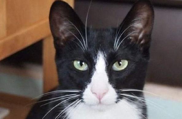 Кот-клептоман украл у молочника деньги и принес домой