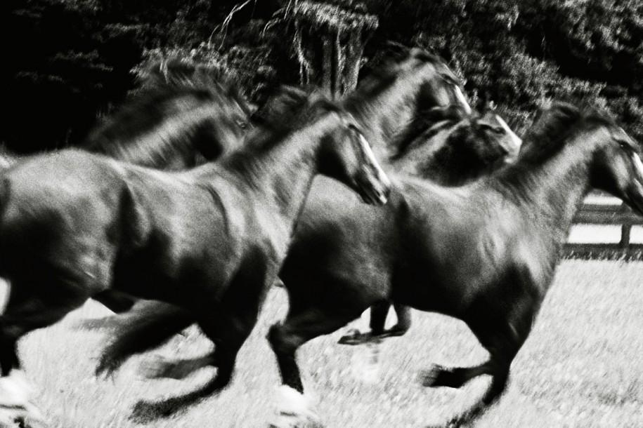 fotograf Dzheyms Makari 28