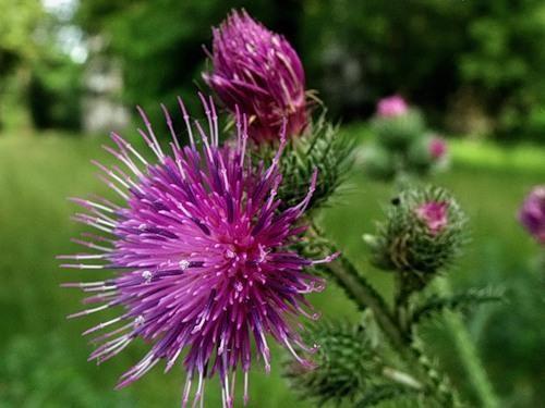 Растения, защищающие дом от бедности и неприятностей