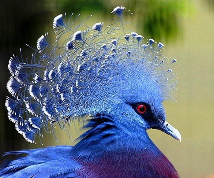 10 птиц с самыми красивыми хохолками