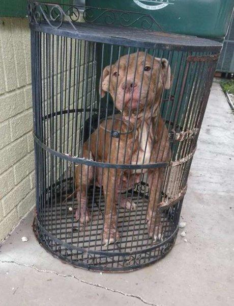 Бедную собаку заперли в птичьей клетке и бросили.