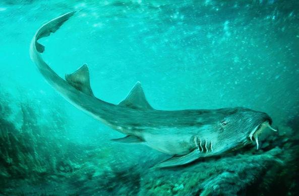 Палеонтологи нашли ископаемую акулу со смешными зубами