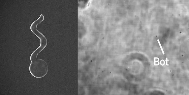 Ученые изобрели микро-боты, …